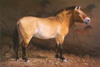 Takhi_Horse